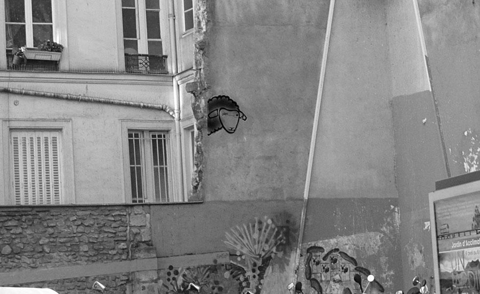 blacksheep image